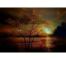 THE COASTAL TREE Photographic Print