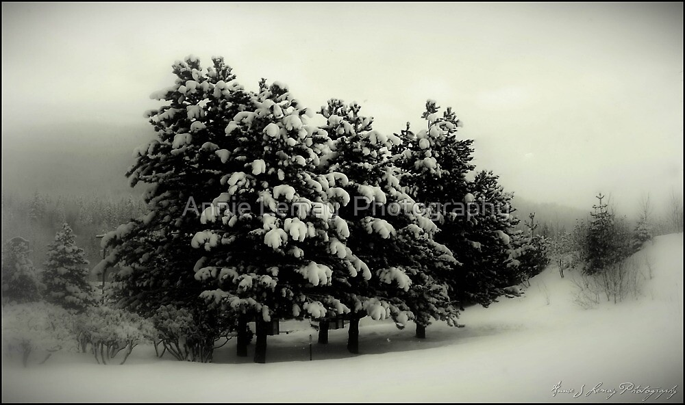 Peace on Earth by Annie Lemay  Photography