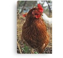 Tough Hen Canvas Print