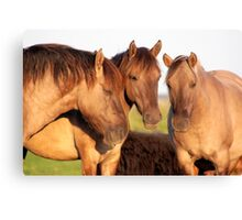 Three Of A Kind - Konik Canvas Print
