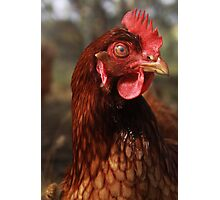 Chicken You Out Photographic Print