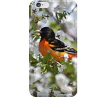 Baltimore oriole in cherry tree iPhone Case/Skin