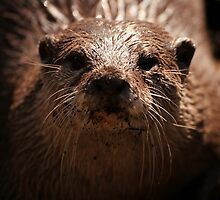 Unbelievable Eurasian Otter by cute-wildlife