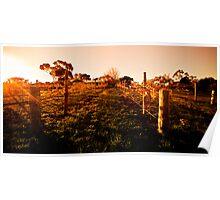 Settlement - winery McLaren Vale SA Poster