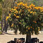 Xmas Tree with Cattle by pennyswork