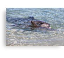 Monkey Mia Dolphins Canvas Print