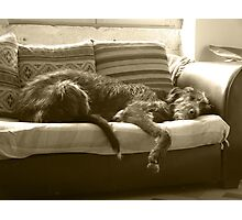 Let Sleeping Dogs Photographic Print