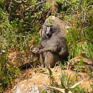 Baboon by Atanas NASKO