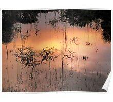 paddock /lake Poster