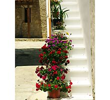 Potted flowers on white steps Photographic Print
