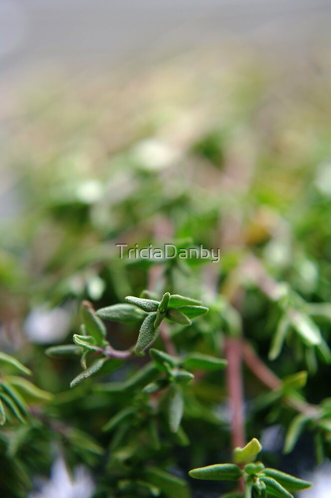 Thyme by TriciaDanby