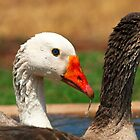 Geese by Roger Barnes