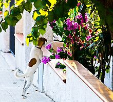 Dog staring at flowers by Emme Gray