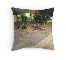 Mob of Kangaroos Throw Pillow