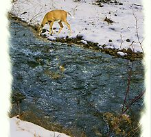 Deer Drinking in Stream by Kenneth Hoffman