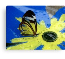 Glasswing on Yellow and Blue Canvas Print