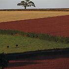 Crops of Many Shades, Sampford Courtenay by Ian Bracey