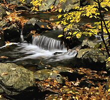 Stream Detail in Autumn by Stephen Vecchiotti