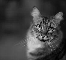 Portrait of a cat by DJ-Stotty