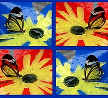 Glasswing on Red Yellow and Blue by ienemien