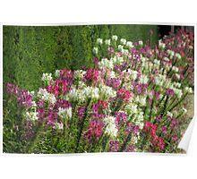 Flowers, Beaulieu  Poster