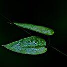 Green heart by Kornrawiee