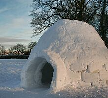 Igloo in Duthie Park, Aberdeen by Matthew Gordon