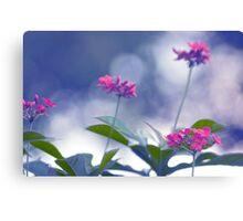 Pink & Blue Canvas Print