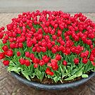 A lot of red tulips by bubblehex08