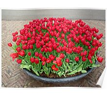 A lot of red tulips Poster