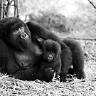 Mother and Baby by Sheila Smith