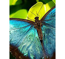 Blue is Always Bluer.. Photographic Print