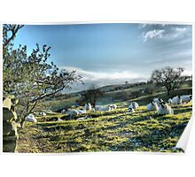 Ewe Looking at Me  Poster