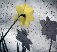 me & my shadows by Jean Poulton