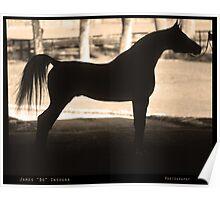 Arabian Horse Silhouette Sepia Black and White Print Poster