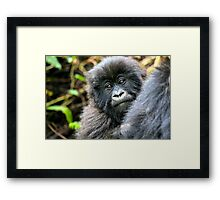 Baby Mountain Gorilla Framed Print