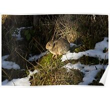 rabbit in the snow Poster