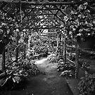 Under The Canopy by © Jolie  Buchanan