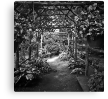 Under The Canopy Canvas Print
