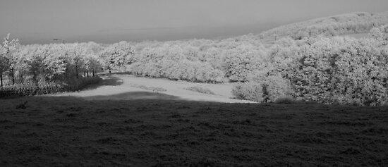 A Winter's Morning by Matt Sillence