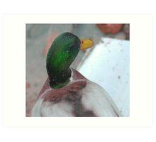 Silky mullard duck Art Print