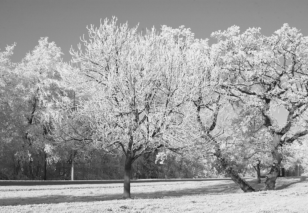 Winter has taken hold by Matt Sillence