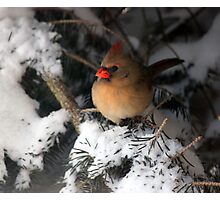 Winter Hideaway Photographic Print