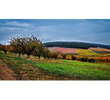 """Autumn Fields"" Photographic Print"
