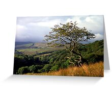 Roeburndale, Forest of Bowland Greeting Card