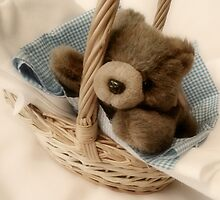 Baby Bear in a basket by hellohappy