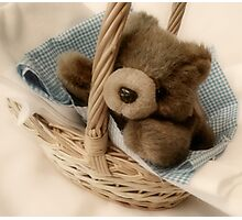 Baby Bear in a basket Photographic Print