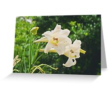 Beauty after the Rain Greeting Card