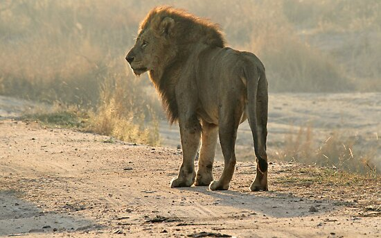 The king surveying his land by jozi1
