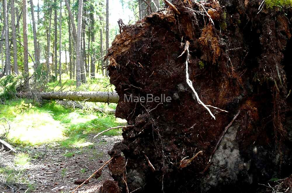 Wind...The ROOT Of The Problem by MaeBelle